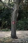 Σηματοδοτούν με σημαιάκια ακόμα και τα δέντρα.