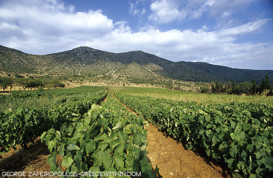 Mantinea's plateau has has vineyards since antiquity.