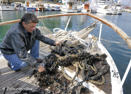 Stelios cleaning his boat from oysters.