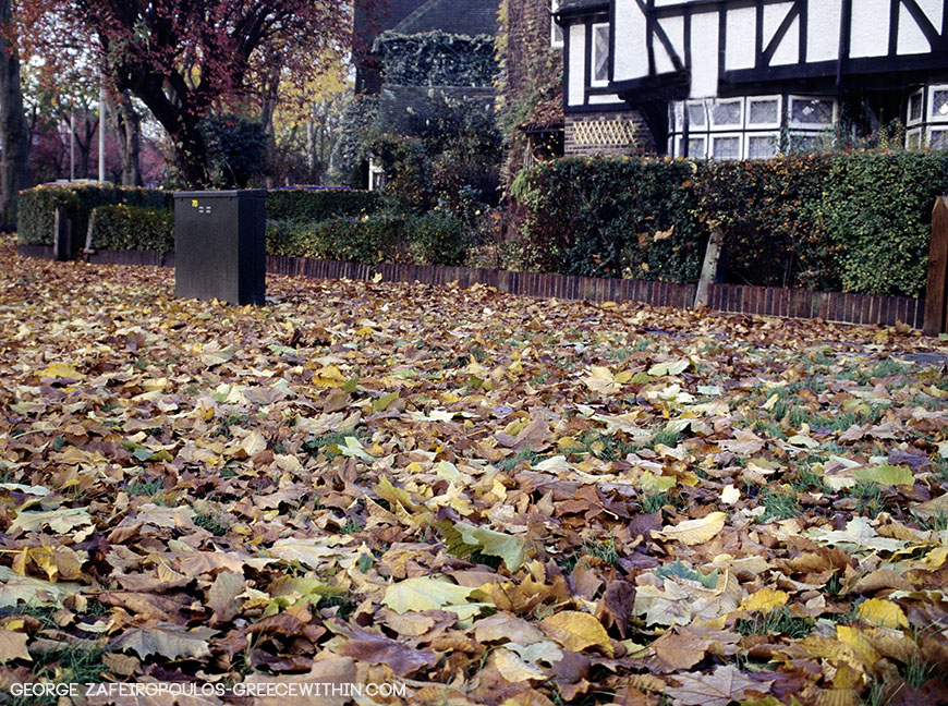 The fallen leaves look like a thick carpet on London's sidewalks.